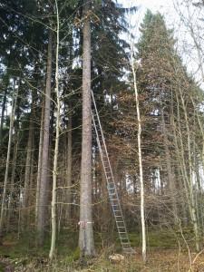 Kletterwald München, die Klettergarten-Baustelle in Grünwald