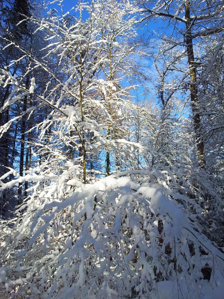Sonne und Schee im Kletterwald